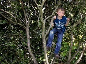 Bührer_Werden und Wachsen_im Baum