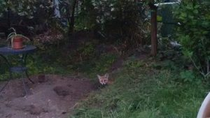 Fuchsbau in einem Garten Am Stadtpark I